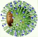 Grippevirus